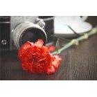 꽃 1401