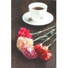 꽃 1395