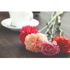꽃 1394