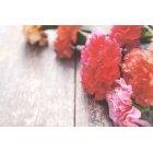 꽃 1374
