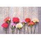 꽃 1372