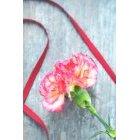 꽃 1362