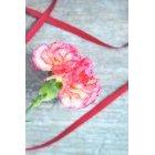꽃 1361