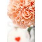 꽃 1516