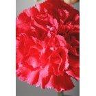 꽃 1598