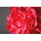 꽃 1597