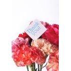 꽃 1585