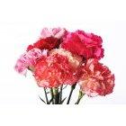 꽃 1561
