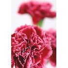 꽃 1638
