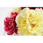 꽃 1652