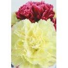 꽃 1651