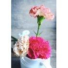 꽃 1643