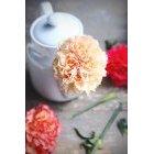 꽃 1642