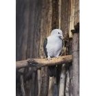 비둘기 6