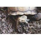 거북이 25