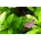 나비 79