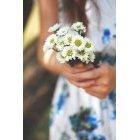 꽃 1964