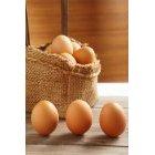 계란 106
