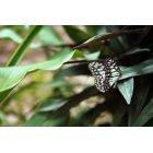 나비 80