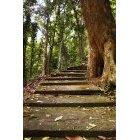 계단 194