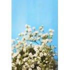 꽃 2778