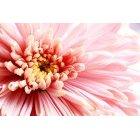 꽃 2704