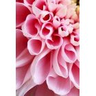 꽃 2702