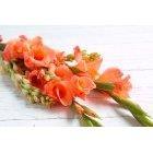 꽃 2682