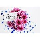 꽃 2603
