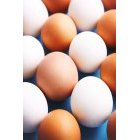 계란 275