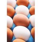 계란 274