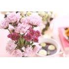 꽃 3186