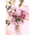 꽃 3185