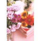 꽃 3182