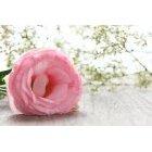 꽃3596