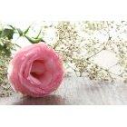 꽃3594