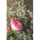 꽃3590